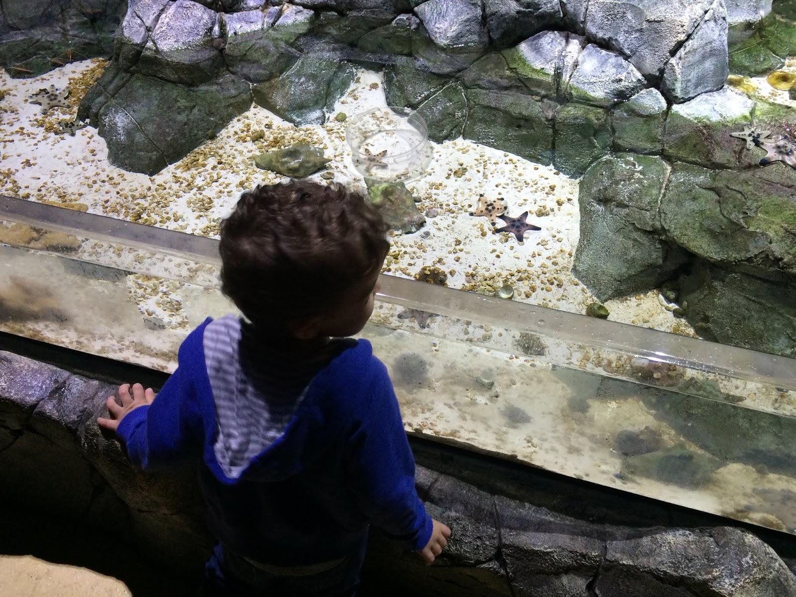 Discount Sea Life Aquarium Charlotte Concord Admission