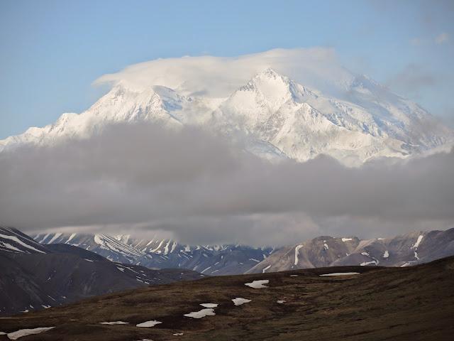 Denali national park 10