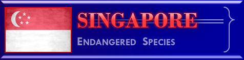 Singapore endangered species