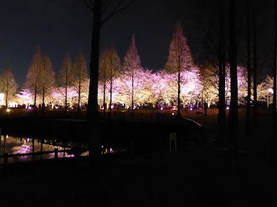 打上川治水緑地 桜のライトアップ(大阪府寝屋川市)