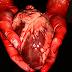 Quanto vale seus órgãos no mercado negro?