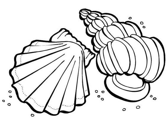 dibujos de conchas marinas