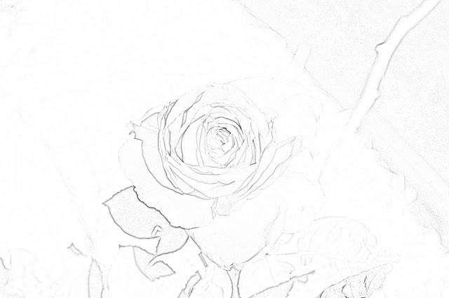 Roses coloring.filminspector.com