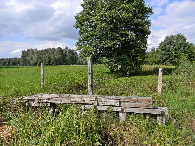 łąka, trawy, Gniła Obra