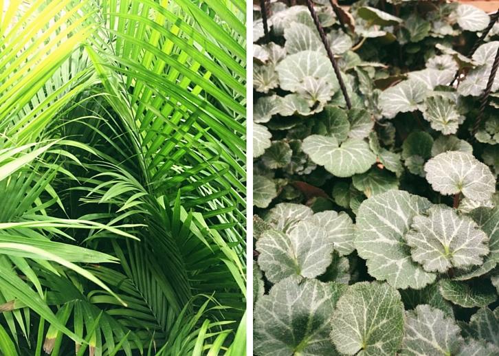 Tropical Plants // WWW.THEJOYBLOG.NET