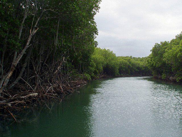 Los manglares de Estero Balsa en Montecristi, República Dominicana