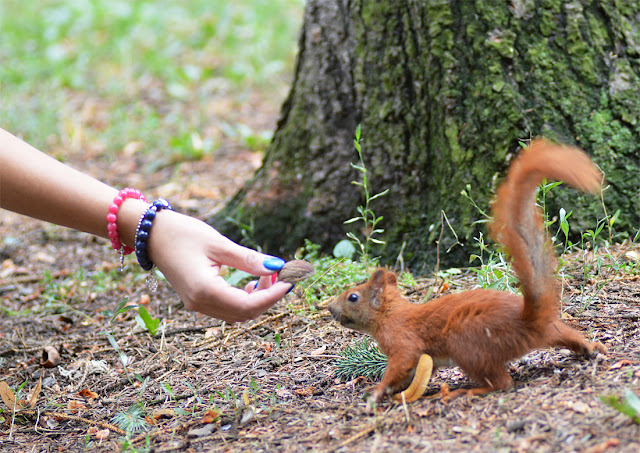 podczas zdjęć spotkałam mnóstwo wiewiórek