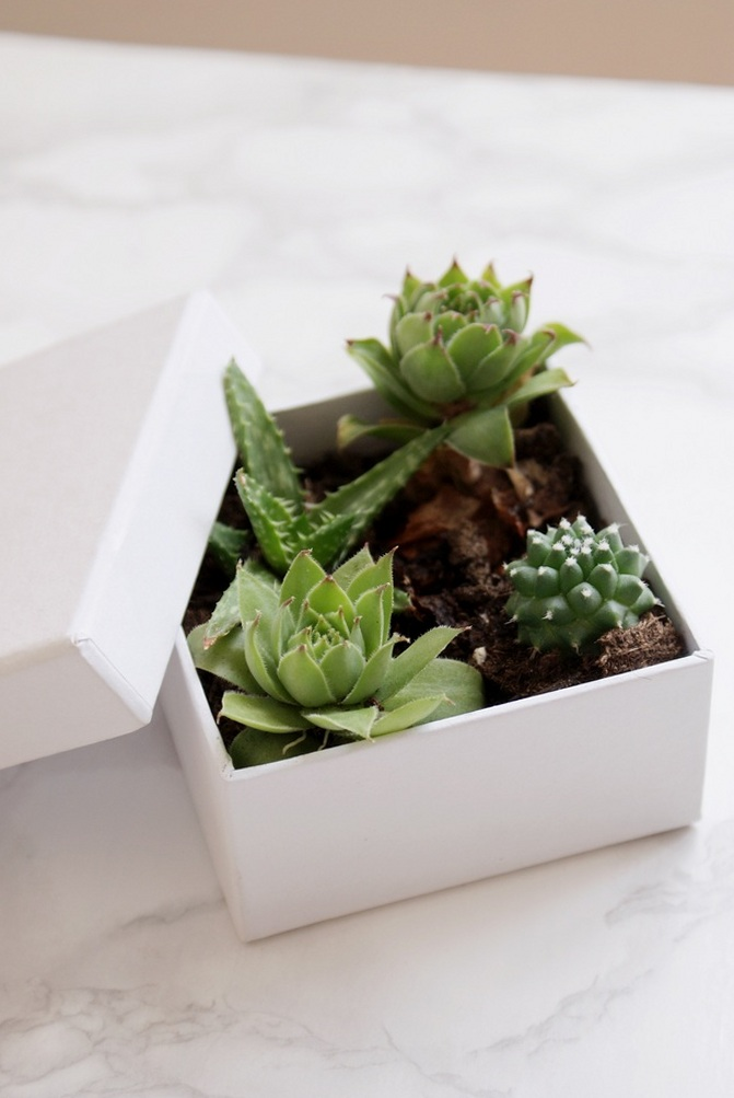 diy succulents box boxed francinesplaceblog