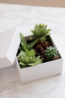 diy succulents box boxed francinesplaceblog