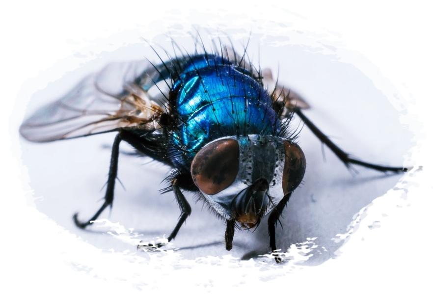 Cara Mengusir Lalat Di Rumah Secara Alami 99% Berhasil