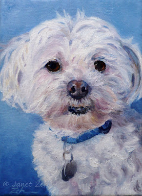 The finished portrait of Riley, a Maltese Poodle
