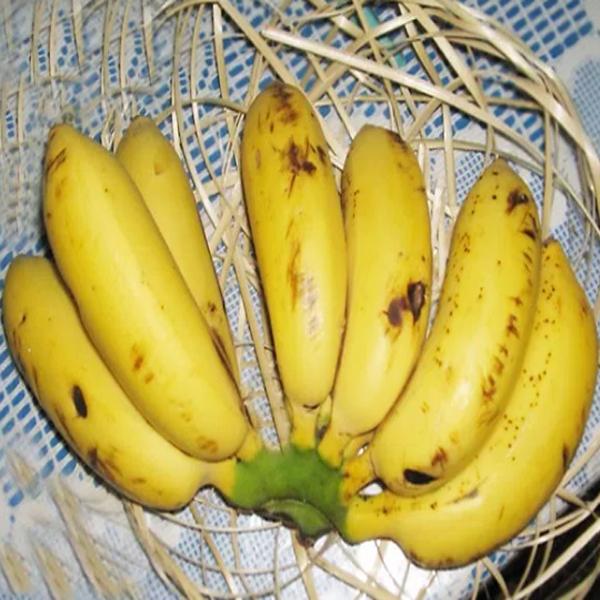 pisang susu, manfaat pisang susu, khasiat pisang susu