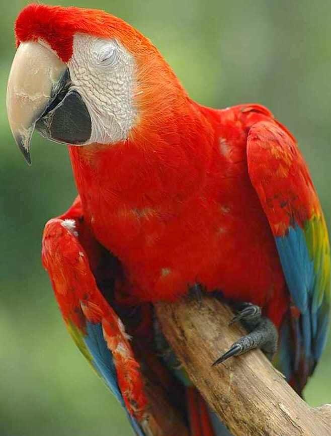 Gambar Burung Kakak Tua  Dunia Binatang