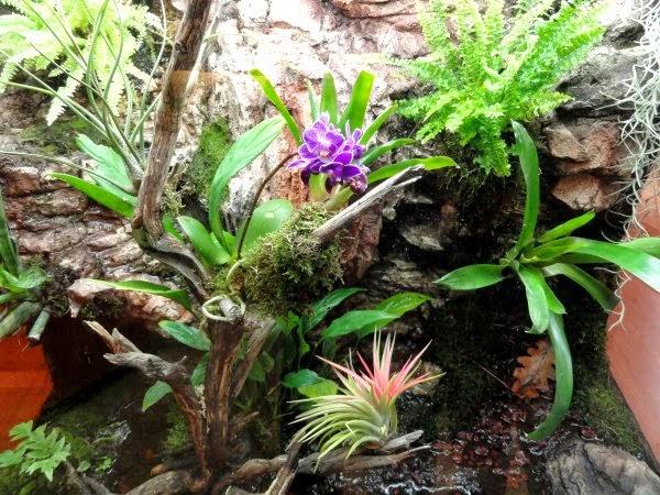 Sphagnum para terrarios