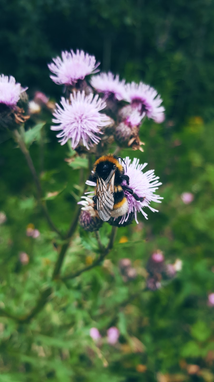 Mr Bumble Bee: Welcome To The Weekend Blog Hop