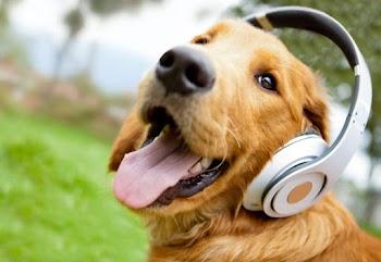 Μάθετε την πραγματική ηλικία του σκύλου σας
