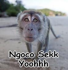 foto kata monyet lucu