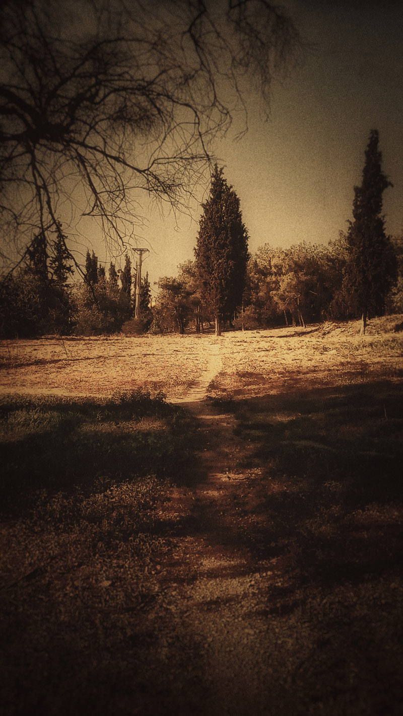 Photo of trees in the distance, and a path going from our view towards them, the mood is almost dark, in a sepia tone. Photo entitled 'Landscape' by Kostas Gogas