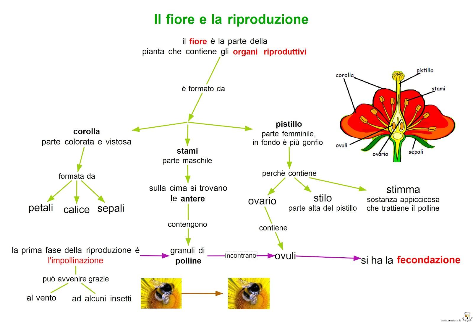 Paradiso Delle Mappe Il Fiore E La Riproduzione