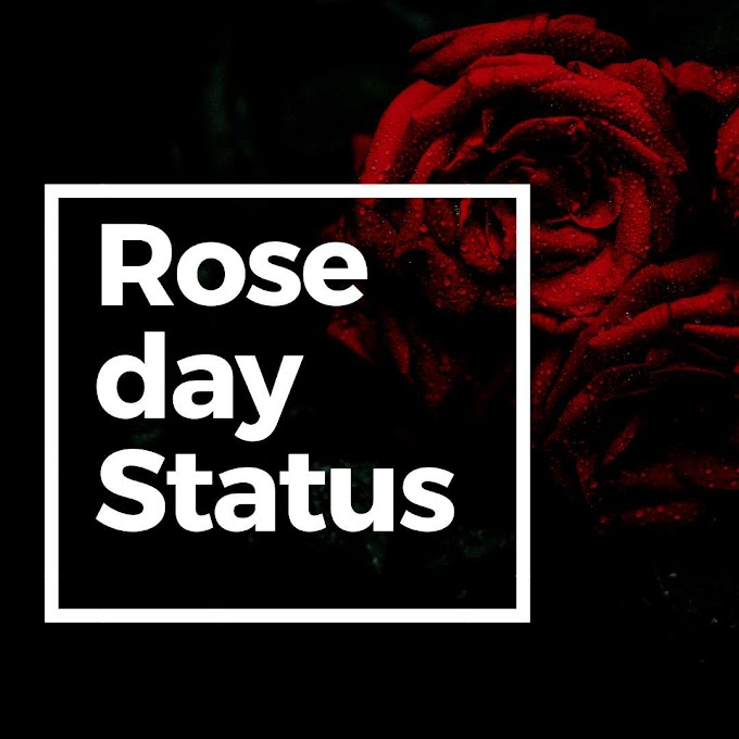50+ Happy Rose Day Status in hindi 2020