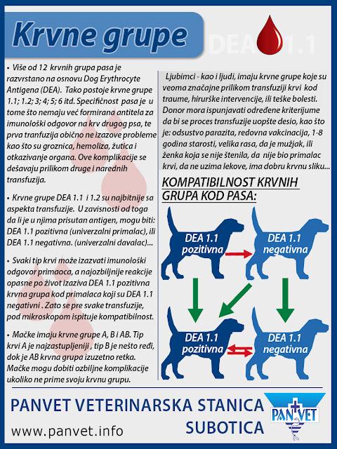 Krvne grupe kod pasa