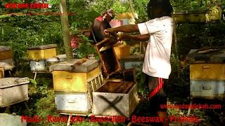 peternakan lebah mad asli di tangerang banten