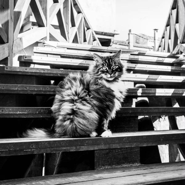 sadhna cat
