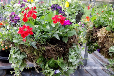 How To Make A Summer Hanging Basket