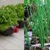 12 Comidas que puede sembrar en botellas de plástico