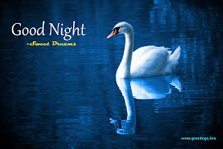 Beautiful Good Night Blue Water Bird Image