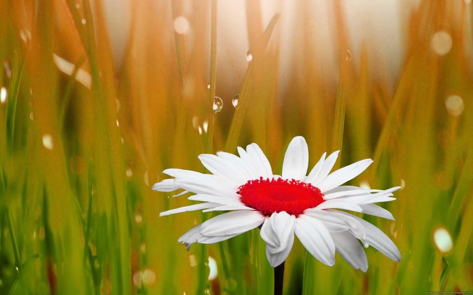 beautiful flowers 2019 » flowers free download | beautiful flowers