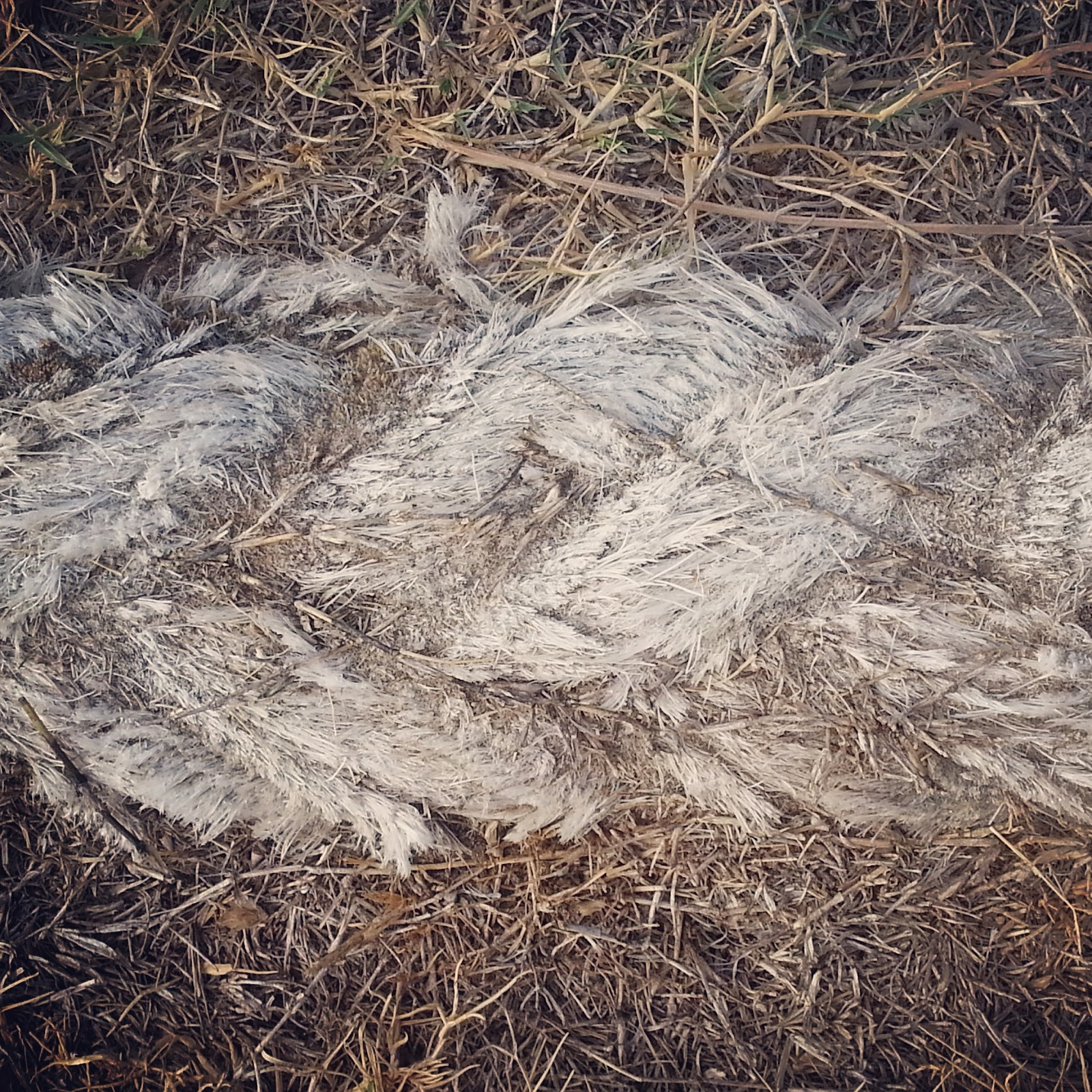 image of an old weathered nautical rope on a dry sunburnt lawn