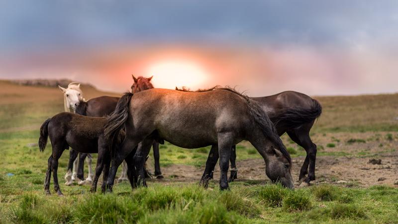 Horses 2 in Romania