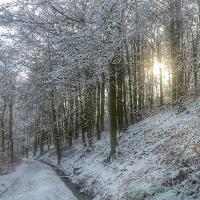 Wald im Winter beim Laufen