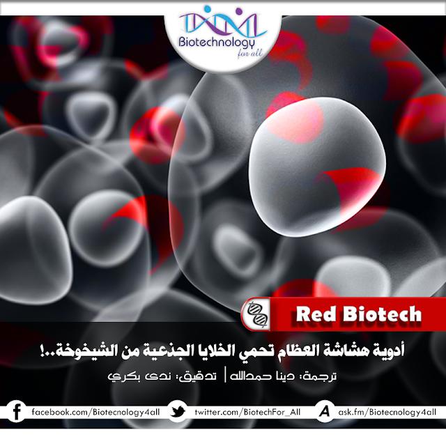 أدويةُ هشاشةِ العِظام تحمي الخلايا الجذعيّة من الشّيخوخة