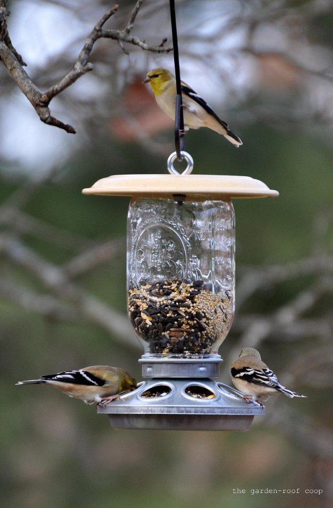 the garden roof coop diy chick feeder bird feeders. Black Bedroom Furniture Sets. Home Design Ideas