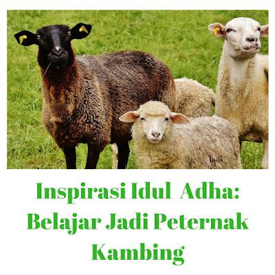 Inspirasi Idul Adha: Belajar Jadi Peternak Kambing