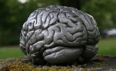 Cociente intelectual - Cerebro