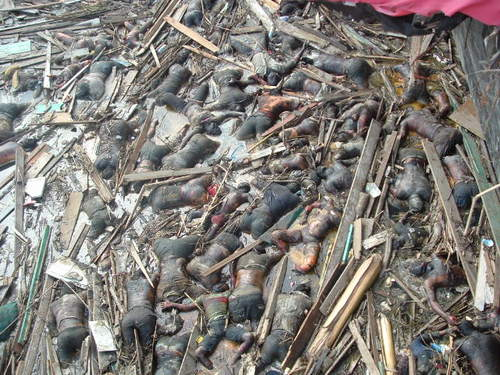 Safril Bentara: Aceh : Tsunami Disaster on 26 dec 2004
