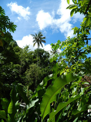 Diamond Botanical Gardens St. Lucia Soufriere  canopy by garden muses-not another Toronto gardening blog