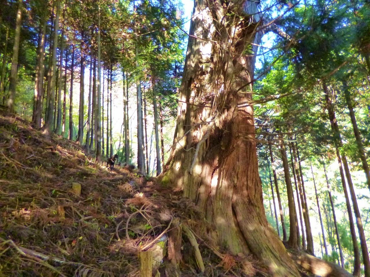 chronicle(山のクロニクル30年): 円山木の頭