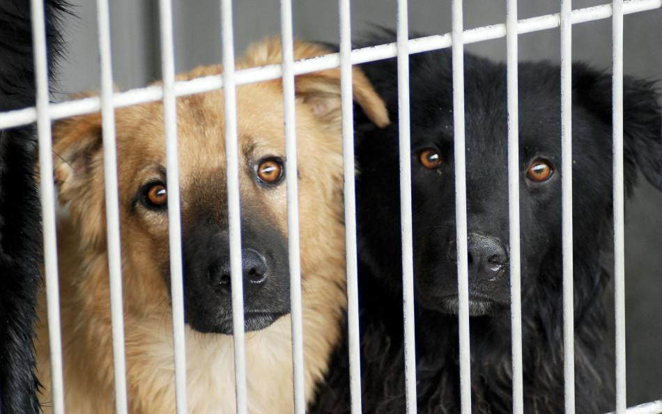 Dois cães no canil