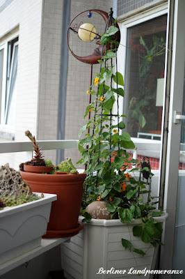 Balkon Schwarzäugige Susanne