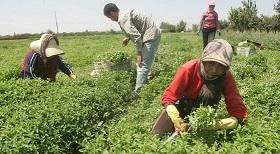 الابادة الاقتصادية على روج افا - شمال سوريا