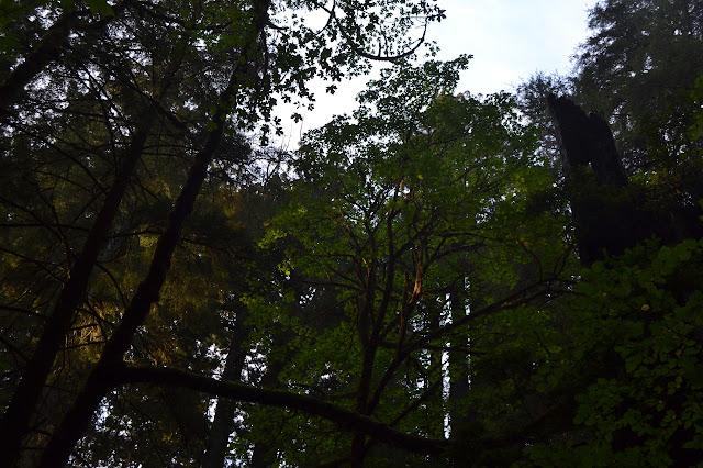 leafy tree in a break