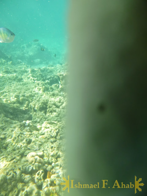 My fail underwater shot in Honda Bay, Puerto Princesa, Palawan