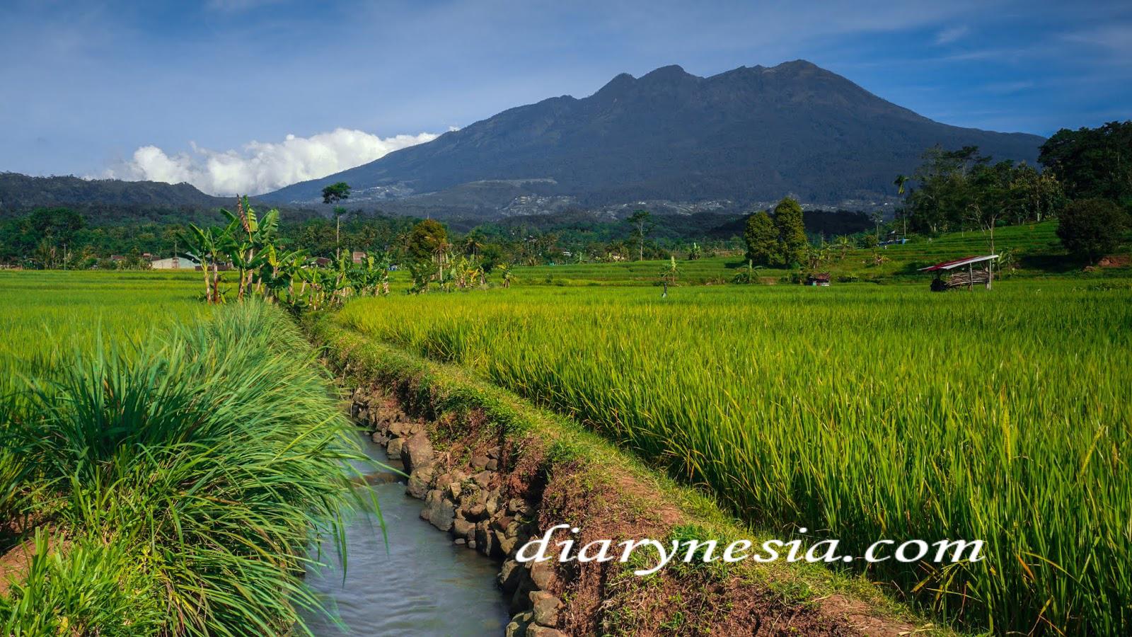 Hiking vacations Indonesia, Mountain Tours and Hikes, Hiking trips Indonesia, diarynesia