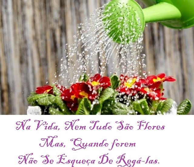 Na vida, nem tudo são flores, mas quando forem, não se esqueça de regá-las.