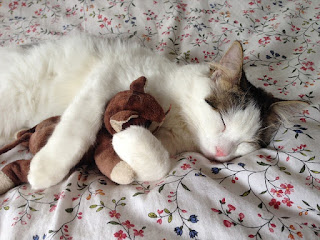 Cat taking a nap while hugging a toy