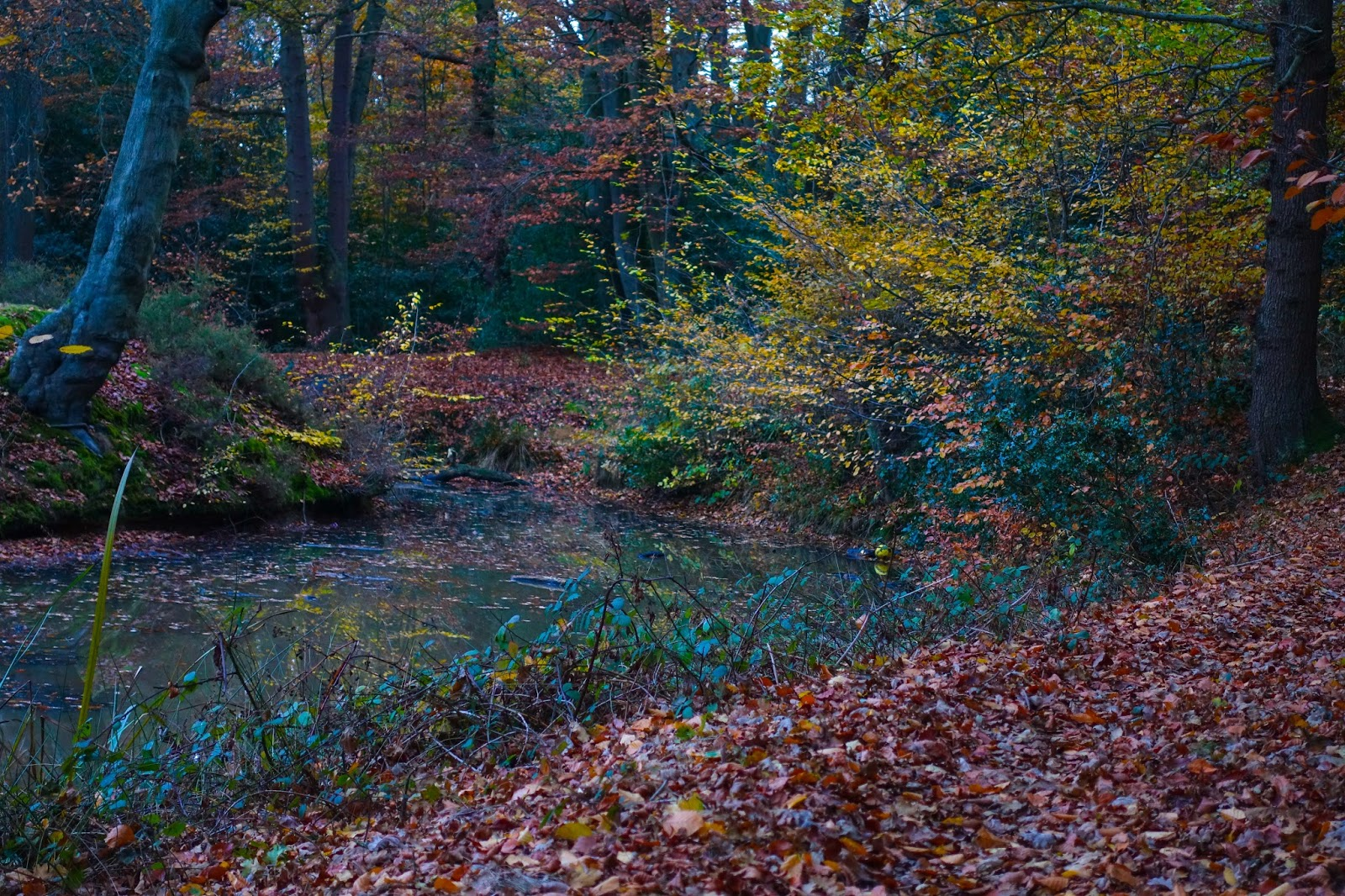 A path covered in leaves, the edge of a lake and trees all autumnal colours